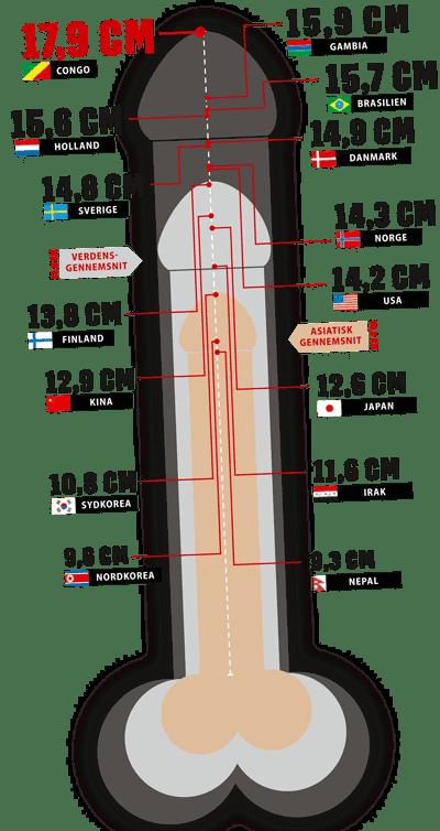 世界のペニスサイズ一覧